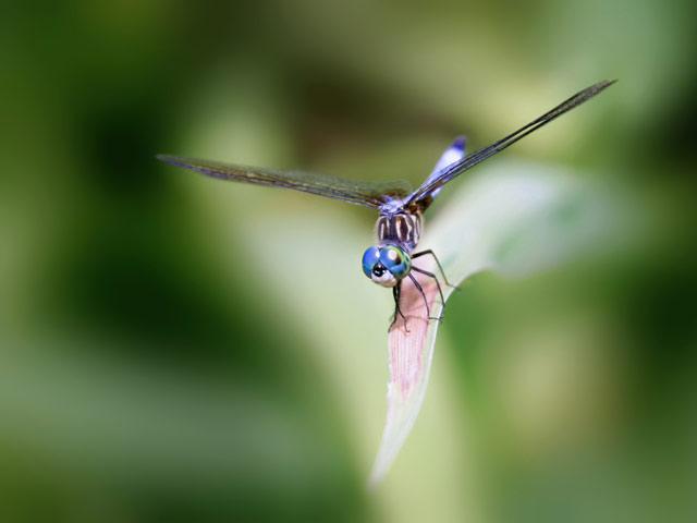 Фотографии стрекоз